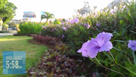 Contoh foto bunga Zenfone Selfie