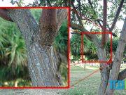 Perbandingan foto digital zoom vs optical zoom