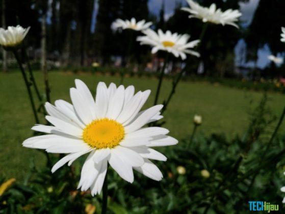 Foto close up menggunakan Zenfone 3